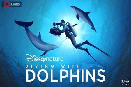 Diving with Dolphins 2020
